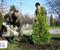 В Киеве продолжают высаживать хвойные деревья