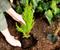 Штрафы за уничтожение зеленых насаждений хотят увеличить