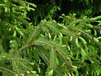 Сдать новогодние елки в пункты приема можно до 1 февраля