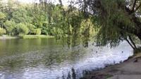 В Киеве в озеро сливают горячую воду