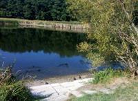 В Голосеевском парке исчезает озеро